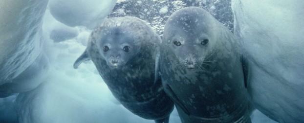 El Ártico: De blanco a negro
