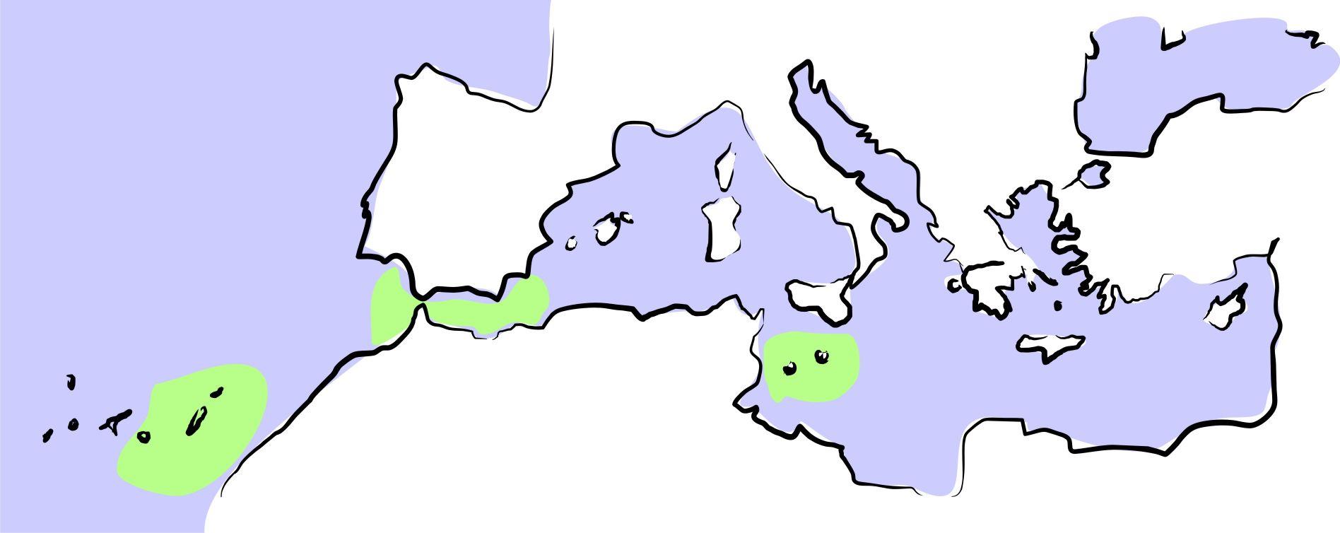 resized_mediterráneo