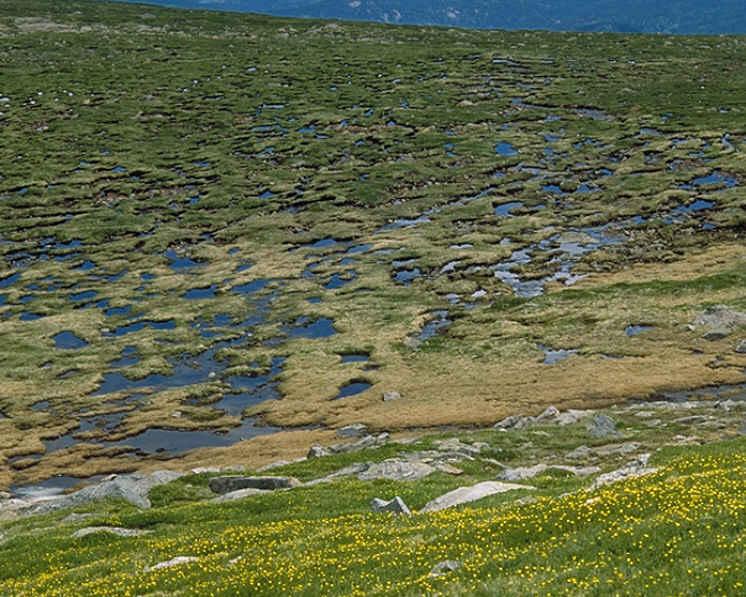 Imagen 3: Tundra, área donde se desarrolla el permafrost. Fuente: http://www.geography.hunter.cuny.edu/