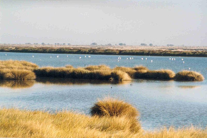 800px-Wetlands_in_Donana