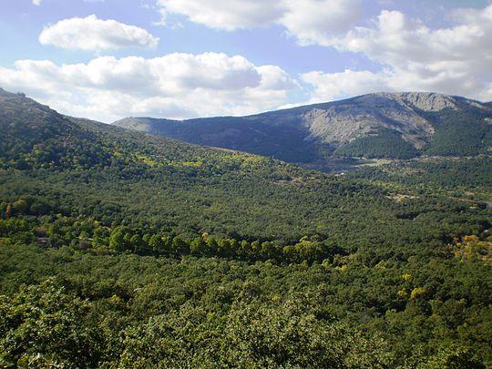 Bosque de la Herrería, Madrid. Fuente: Wikimedia.